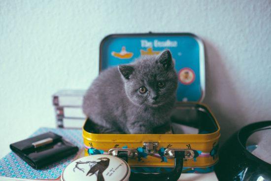 Gatito en maleta