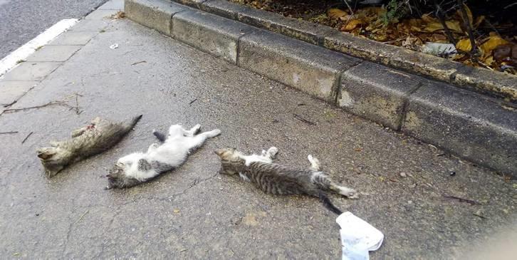 Valencia 3 gatos muertos. Presunto autor identificado