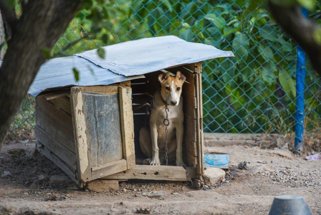 Perro encadenado en una pequeña jaula