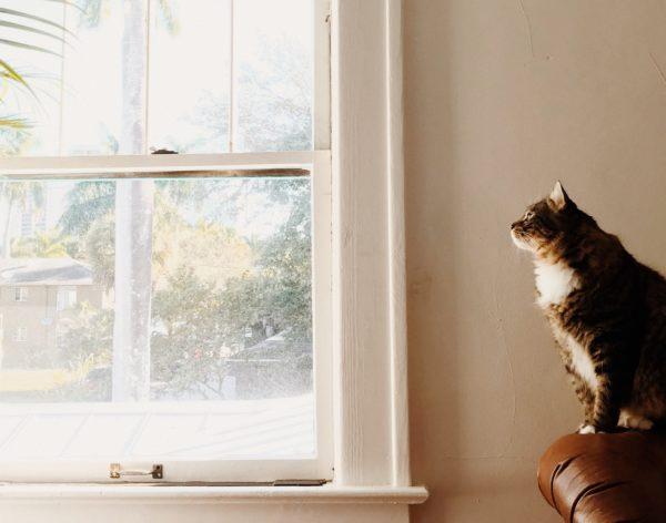Un gato con ganas de escapar por la ventana