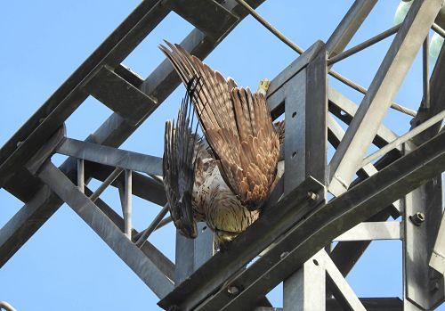 La fiscalía señala a las comunidades autónomas por no afrontar el problema de las muertes de aves en los tendidos