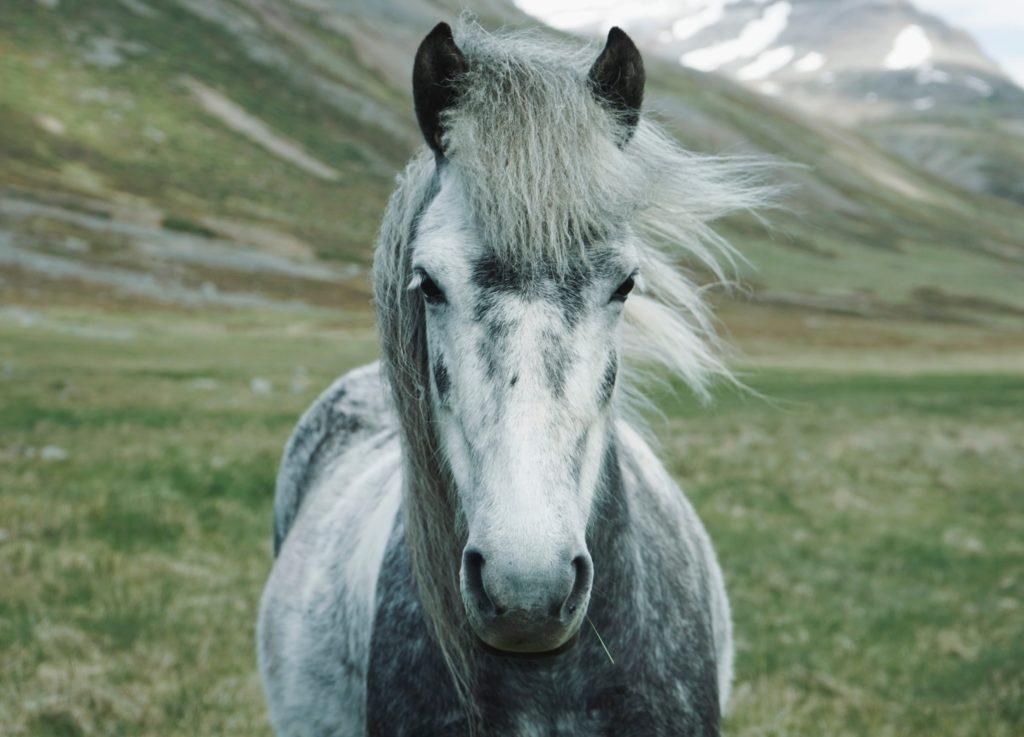 Un caballo libre ante un paisaje invernal